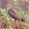 340_Bird_IMG_1902
