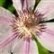 flower4-8-7-12_1024