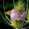 Wild flower129