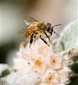 flowering bee-1990