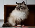 Cat in a Box...sort of