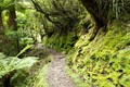 Gallery Gorge Walk - Franz Josef Glacier NZ