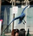 silver gull flies over Sydney Street