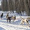Marquette Sled Dog Race