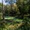 duckweed pond