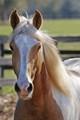 pony 2-22-11A