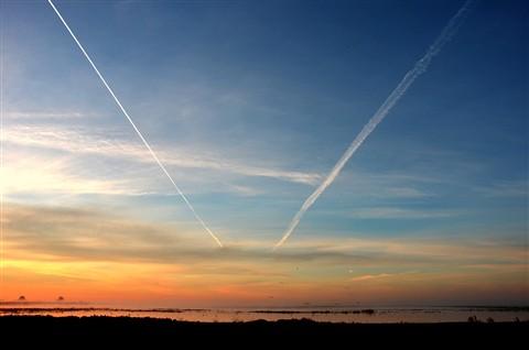 Crane Sunrise 08