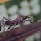 Bugs 10-13-2018-6