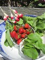 Radishes, Strawberries & Baby Arugula