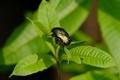 Bug on leaves