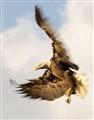 EagleStrike2525w