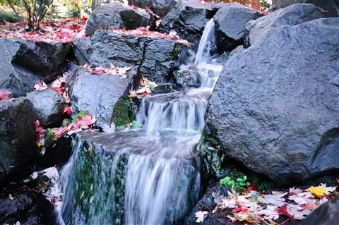 Leaves & falls