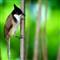 Bird C (1)