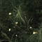 Spearwort among the horsetails 1