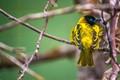 ZooHD_bird-0188