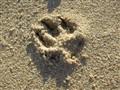 white sand imprints
