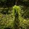 Moss Eruption-2371