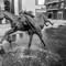Wild horses, Aldgate