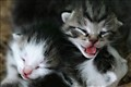 Kittens upload