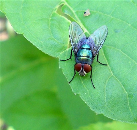 A Glowing Fly..Sitting High..