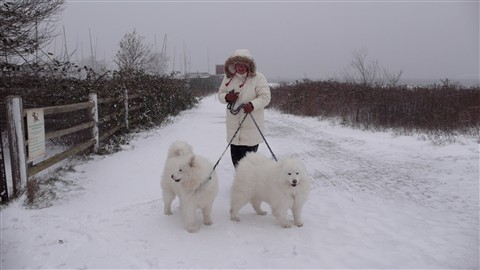 dogsled training in Surrey