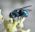 A fly.
