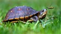 Turtle & Hornet 16x9