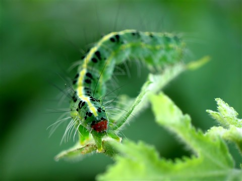 NEO GREEN CATARPILLAR_01