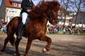 """at the horse display show during the """"Leonberger Pferdemarkt"""". This is a big German horse selling fair, with lots of horse shows, a fair, and a horse selling auction."""