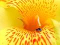 bee~yellow...