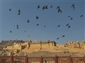 Gorgeous Jaipur