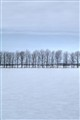 Tranquil Winter Snowfield