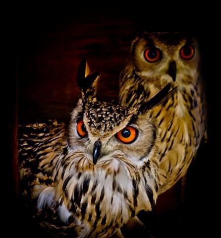 Night_Owls