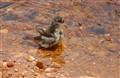 birdbath01