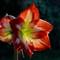 Schwany Flower
