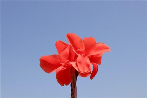 vivid red on bright sky