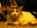 Pussycat under streetlamp