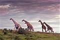 Hluhluwe game park, South Africa