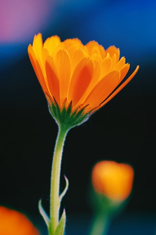 morning-flower-no-03