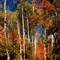 Wasatch Mountain State Park fall colors 2