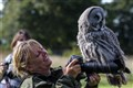 The Owl and the Photographer