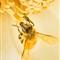 Golden Bee-1