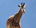 Tallest Animals on Earth