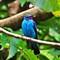 Jurong Bird Park (21)