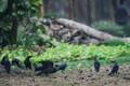 Your city-city birds-Crows,Kolkata city park,