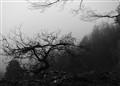 A leafless tree in B&W 2