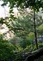 Garden in the Forest