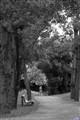A bench... a path