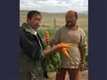 mongolian gardener