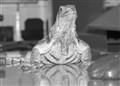 Iguana's reflection